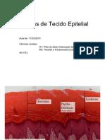 Tecido Epitelial Laminas