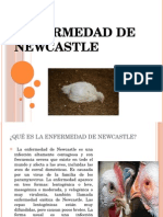 enfermedad-Newcastle.pptx