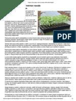 Paprika_ Faze sijanja i tretman rasada _ AGRO-EKO Magazin.pdf