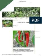 SADNjA RANE PAPRIKE.pdf