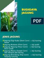 1.Budidaya Jagung Tatap Muka 1