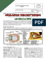 Guía 2 - Grado Octavo 2015 - 2015 - Organos Receptores (Parte 2)