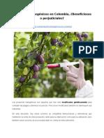 Productos transgénicos en Colombia, ¿Beneficiosos o perjudiciales?