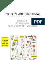 Protozoare (Protista)