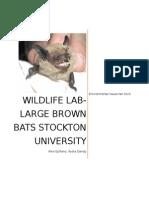 wildlifelab docx