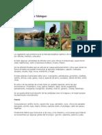 Flora y Fauna de Metepec
