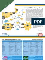 lipid_metabolism_card.pdf