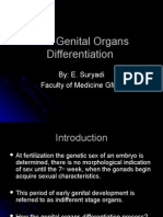 The Genital Organs Differentiation