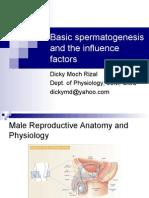 Basic Spermatogenesis