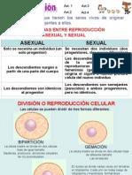 La FunciÓn de ReproducciÓn6