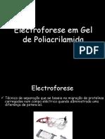 Electroforese Em Gel de Poliacrilamida