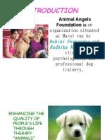 Animal Angel Foundation