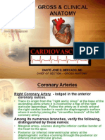 clinical anatomy cardiovascular