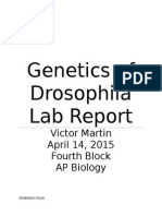 AP Biology Genetics of Drosophila Lab Report