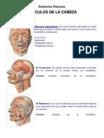 Anatomía Humana - Musculos de La Cabeza y Cara