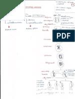 Embryology hand written notes