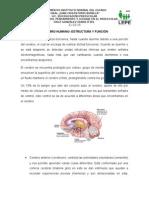 cerebro humano tarea de la 2a unidad