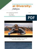 animal diversity- chondrichthyes