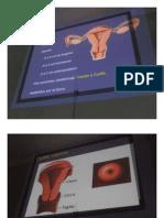 Ginecologia - Clase 02 - Aparato Genital Femenino - 29abr15