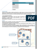 Clase 005 Obstetricia - Desarrollo Del Huevo Humano