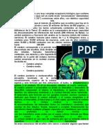 El Cerebro Humano (1) (1)