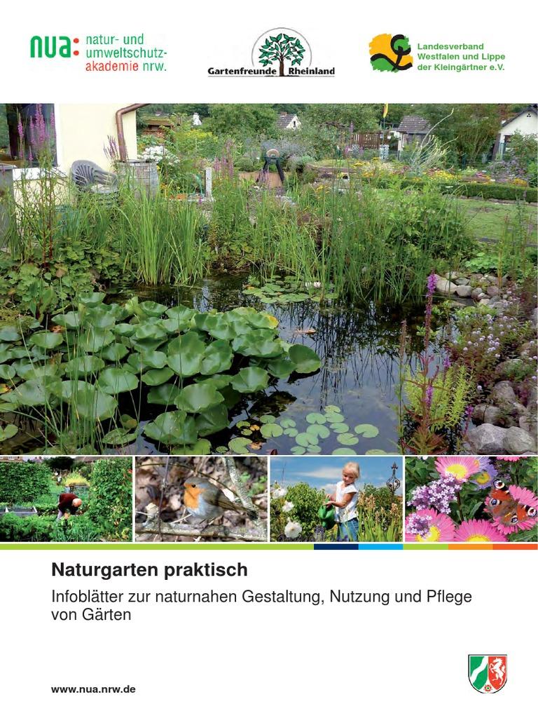 Centaurea Cyanus Bio-Samen aus dem eigenen Naturgarten Wilde Kornblume