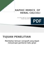 Sonographic Mimics of Renal Calculi