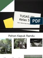 Tugas IPA Fabian- Pohon2an