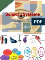 sensory-system.pdf