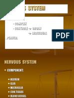 k7_1.Nervous System(Pa)
