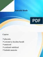 Anexele fetale