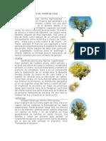 PLANTAS MEDICINALES 2