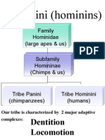 02 Hominini