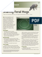 Snaring Feral Hogs