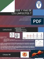 Celulas Linfondes y Vias de Linfocitos T.pptx