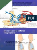 Sistema respiratorioxd.pptx