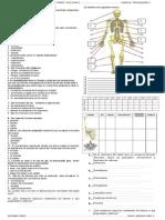 Ficha de Trabajo Sistema Oseo