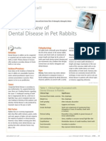 Dental Disease Rabbits