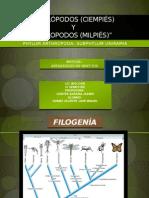quilpodosciempisydiplopodosmilpis-120427180319-phpapp01.pptx