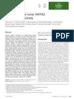 Aerobic Glycolysis Tunes YAP-TAZ Transcriptional Activity