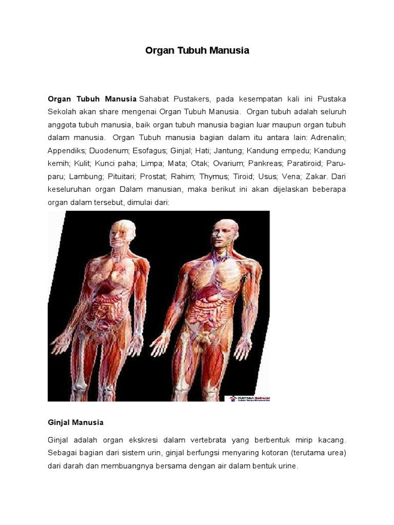 Artikel Organ Tubuh Manusia