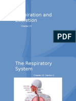 13-1 the Respiratory System Web