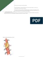 Common Surgical Procedures