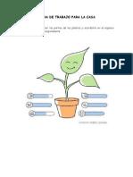 Ficha de Trabajo Para La Casa - Las Partes de Las Plantas