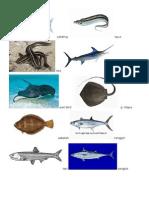 Hewan Laut.docx