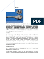 Patologia en La Practica