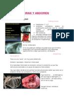 Cirugia Torax y Abdomen