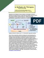 Fijación Biológica de Nitrógeno