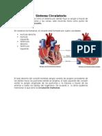 Ensayo- Sistema Circulatorio