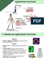 Presentación Tejidos Organos Sistemas y Aparatos Tema 2